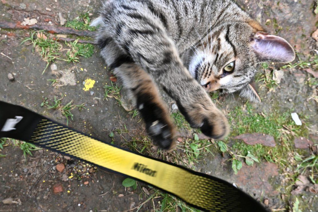 Nikon-Katze