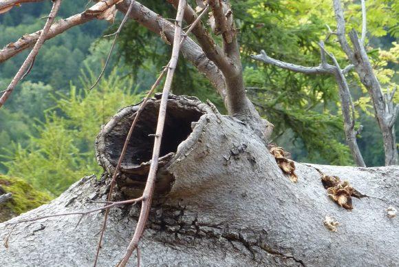 Ein Astloch mit spooky Zweigen oben drüber